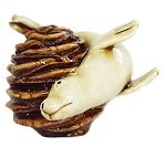Seal on Pine Cone
